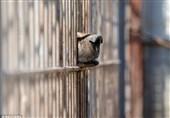 تنها بازماندگان باغوحش موصل+فیلم و عکس