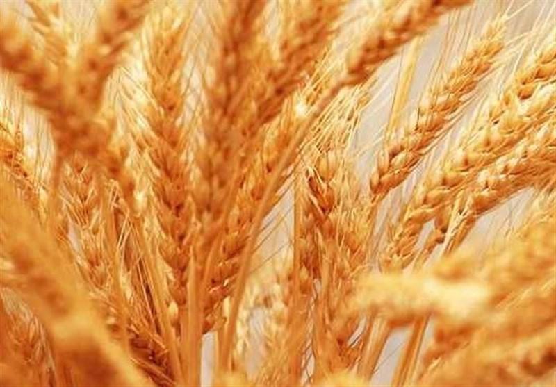 70 هزار هکتار گندم دیم در اردبیل کشت شد