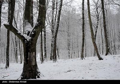 بارش برف در بهشهر