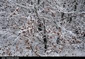 خودداری از تردد در راههای مواصلاتی فیروزکوه/ برف و کولاک در راه است