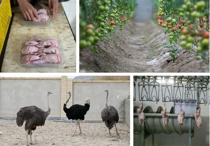 کشاورزی زاهدان
