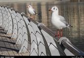 جزئیات آنفلوآنزای H5N8 پرندگان دریاچه چیتگر/تفاوت دو ویروس در ایران