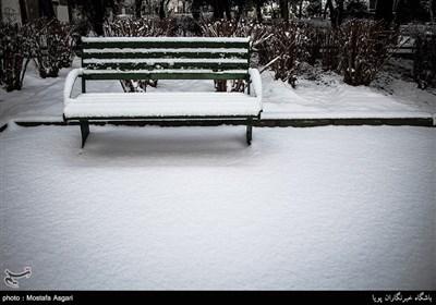 سکوت سرد زمستان