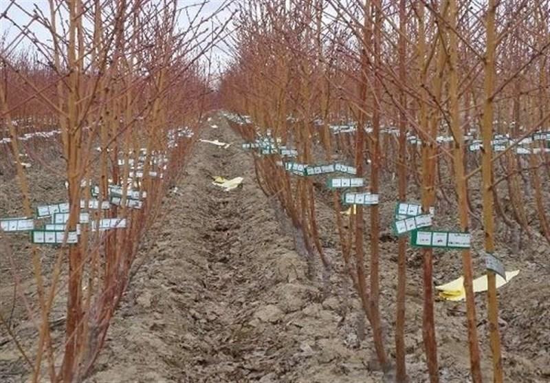 170 هزار نهال مرتعی در استان گلستان تولید و کاشته شد