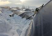 خسارت میلیاردی به گلخانهداران ملایری به خاطر بارش برف سنگین و قطعی برق