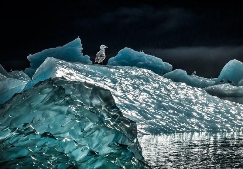 عکس روز نشنال جئوگرافی/ یخ شناور