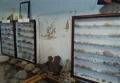 نگهداری دوهزار فسیل در یک باغ/ موزهداری تجربی و چالش صحتسنجی