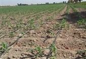 خبر خوش برای کشاورزان تهرانی/وام 15 میلیون تومانی در راه است