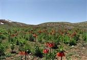 وزیر میراث فرهنگی مراتب ثبت ملی 7 اثر طبیعی را به استاندار لرستان ابلاغ کرد