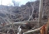 شکسته شدن درختار چنار