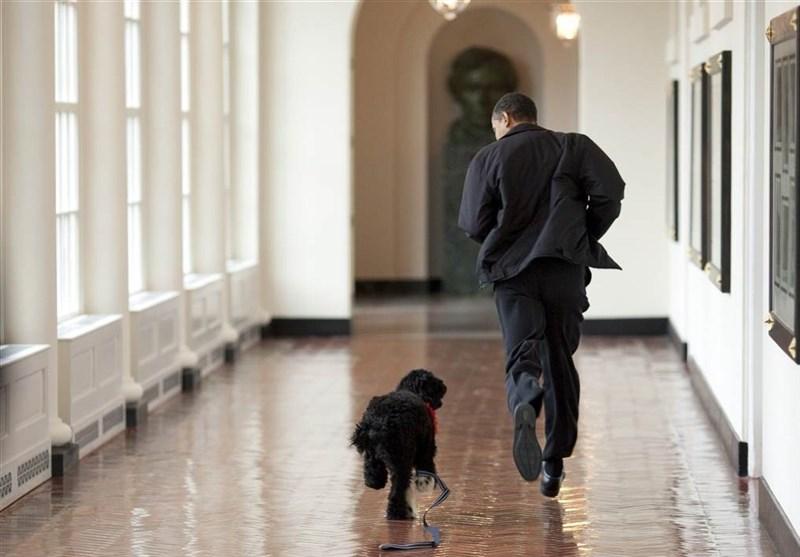 عکس/علاقه روسای جمهور آمریکا به سگ و گربه