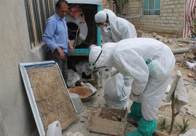 9 استان درگیر آنفلوآنزای حاد پرندگان/ تلاش برای مهار بحران تا 1400