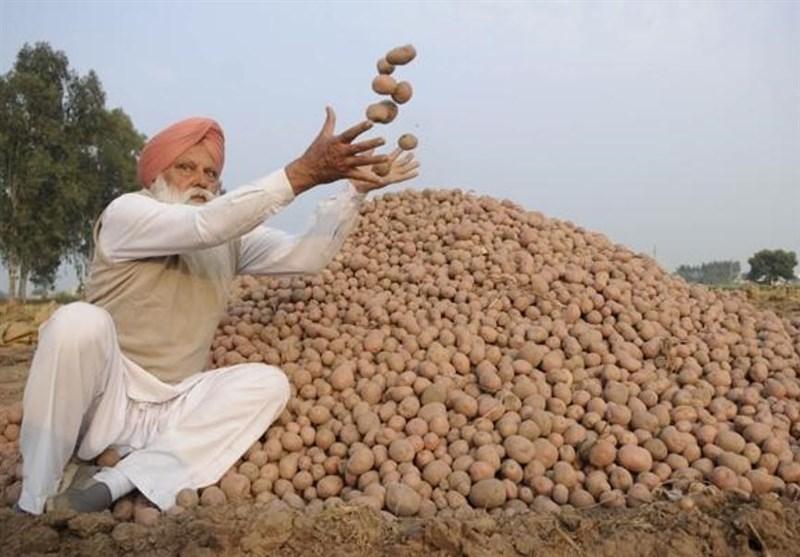 سیب زمینی هندی