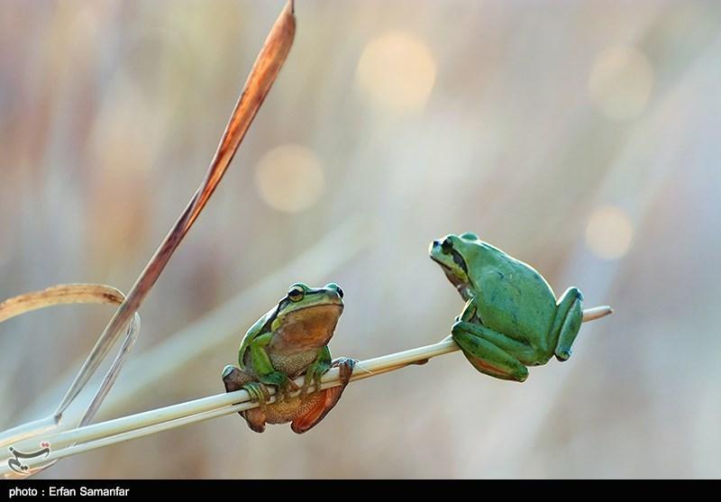 https://newsmedia.tasnimnews.com/Tasnim/Uploaded/Image/1395/12/13/1395121319124668210167894.jpg
