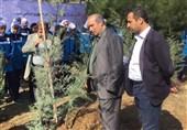 برگزاری مراسم روز درختکاری با حضور رئیس فدراسیون فوتبال + تصاویر