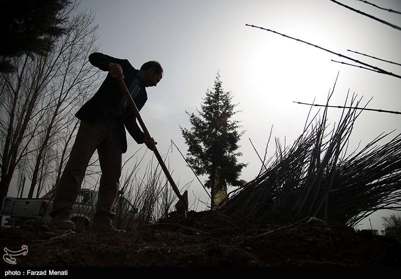 یوم الشجرة فی ایران + صور