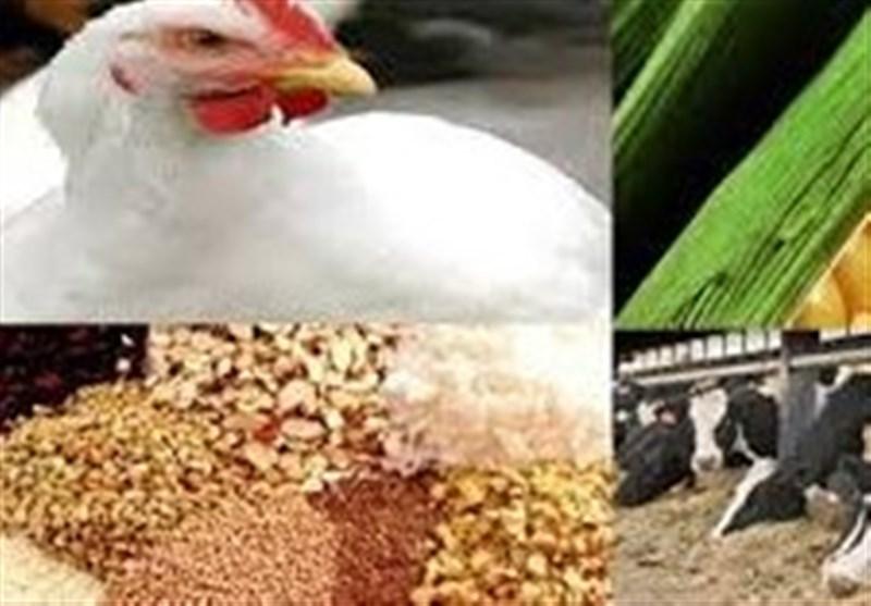 توقیف 150 تن نهاده دامی در مبارکه / سربازان گمنام امام زمان (عج) نهادهها را در یک مرغداری کشف کردند