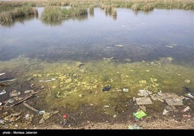 مشکلات زیست محیطی تالاب شادگان - خوزستان