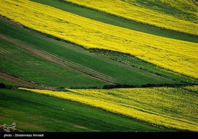 شمالی ایران کے صوبہ مازندران میں بہار کی آمد