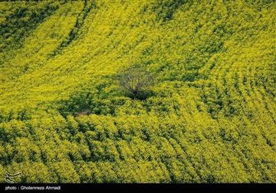 ایران کے شمال میں صوبہ مازندران میں بہار کی آمد