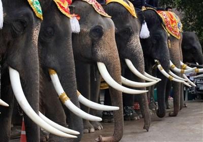 روز فیل