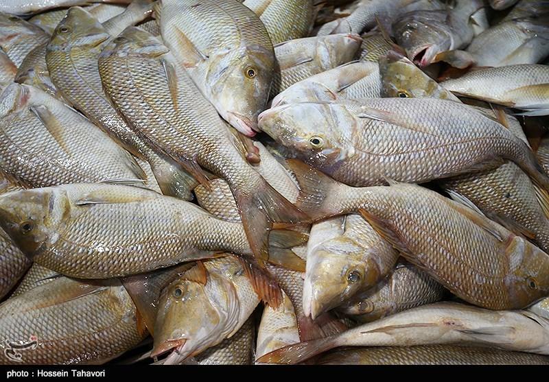 بازار ماهی کیش در آستانه نوروز