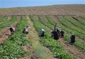 قزوین| تشکلهای مردمی نقش موثری در حفاظت از محیط زیست دارند