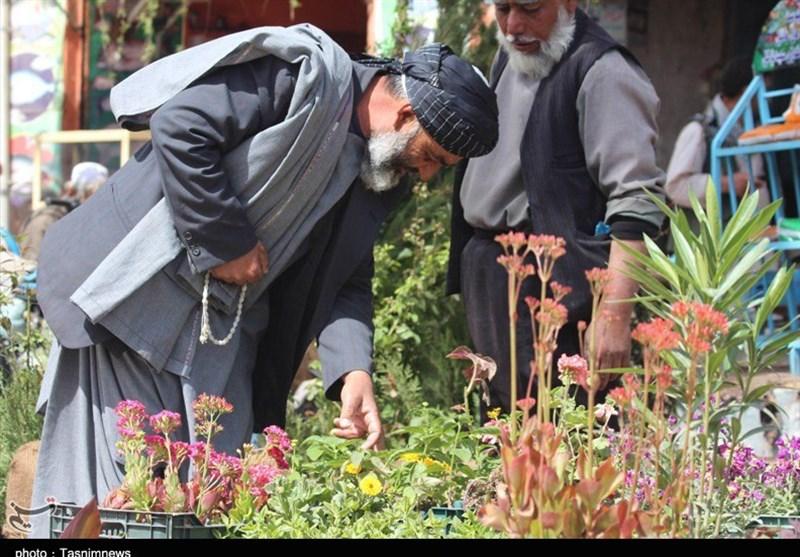 نوروز در افغانستان5