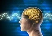 تازهترین یافتههای دانشمندان درباره ساختار مغز انسان