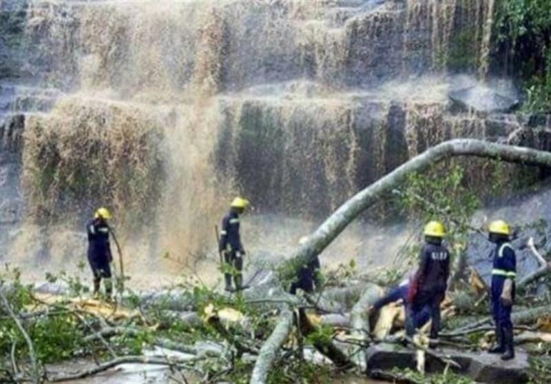 سقوط درخت در غنا