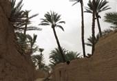 نخلستان بافق نماد بذل و بخشش کویر ایران/ کریمترین درختان دنیا پذیرای گردشگران نوروزی+تصاویر