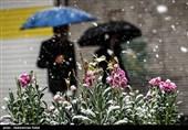 زنجان|بارش برف بهاری زنجان را سفیدپوش میکند