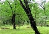 4 اثر میراث طبیعی استان گلستان ثبت ملی شد