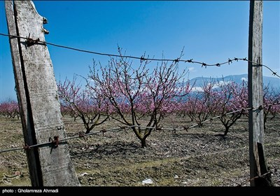 Beauties of Iran's Mazandaran Province in Spring