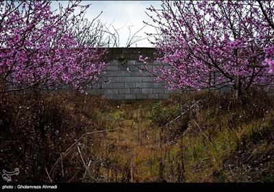 Beauties of Iran's Mazandaran Province in Spring