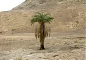 دشت سمسور شهرستان بزمان
