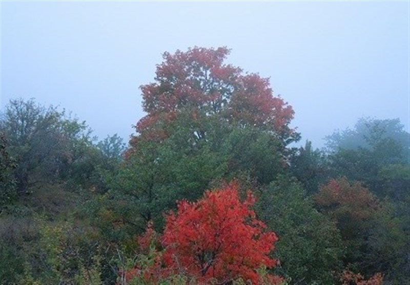 رودبارک آخرین رگههای جنگلهای هیرکانی در شمال شهرستان مهدیشهر+تصاویر و فیلم