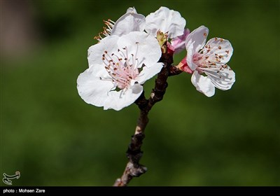 Iran's Beauties in Photos: First Days of Spring in Ardabil