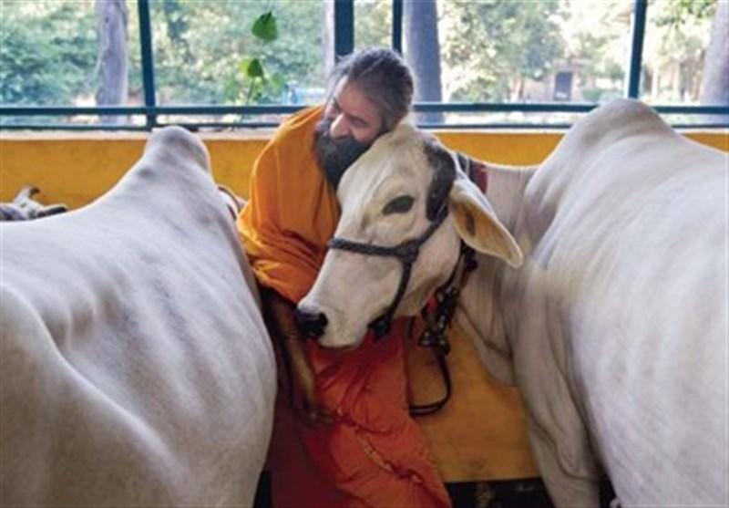 بھارت گائے 1