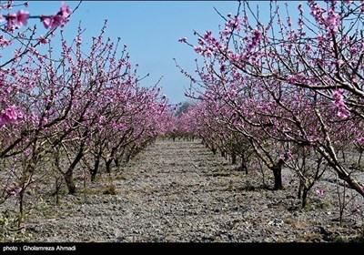 شمالی ایران میں بہار کی دستک