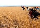 """3 خیانت به کشاورزی ایران با امضای """"سند آموزش 2030 یونسکو""""+ سند"""