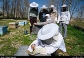 تسهیلات ارزانقیمت به زنبورداران گیلان پرداخت میشود