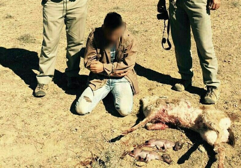 شکارچی آهو
