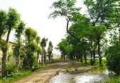 وقف 400 اصله درخت برای تامین سایهسار رهگذران و مسافران
