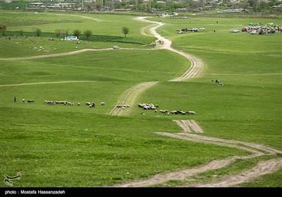 جشنواره فرهنگ و اقتصاد -روستای آق قمیش