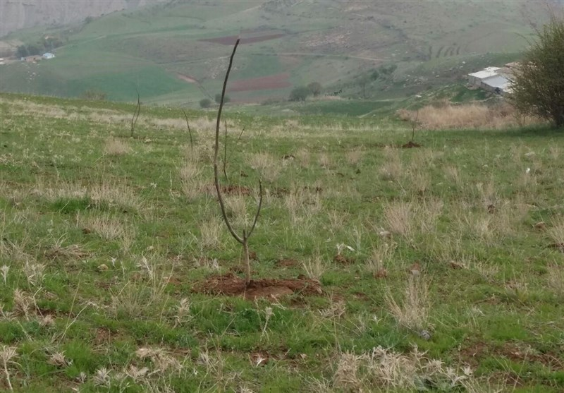 تولید بیش از2 میلیون نهال در استان کردستان