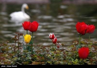 ایران کے شہر کرج میں پھولوں کا میلہ