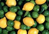 قیمت جدید عمده فروشی میوه/پرتقال ممتاز شمال 2500 تومان