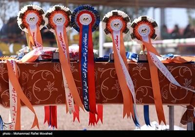 مسابقه ملی پرش با اسب جام کرامت - قم