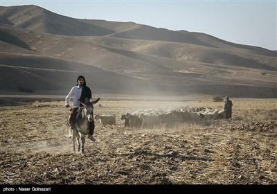 ایران کے صوبہ ایلام میں خانہ بدوشوں کی زندگی